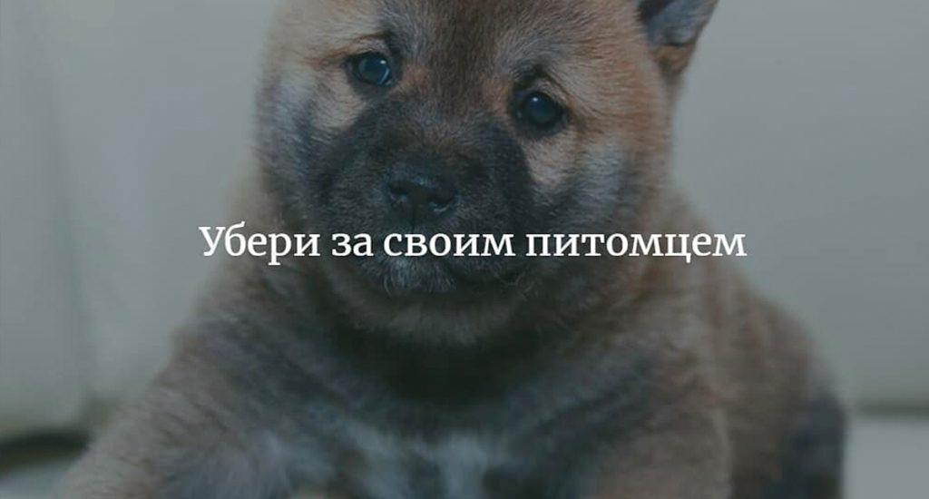 Убери за своим питомцем. Советы юристов Москвы