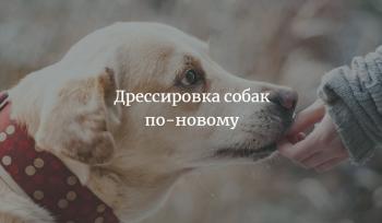 Закон о дрессировке собак по-новому